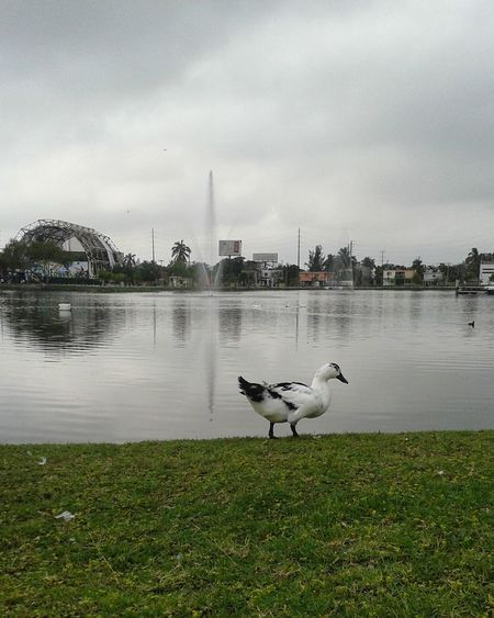 Madero Tamaulipas Parque Bicentenario Bird Animal Themes Animals In The Wild Animal Wildlife Water Animal No People Lake Cloud - Sky Sky Nature Outdoors Day Long Goodbye Neighborhood Map