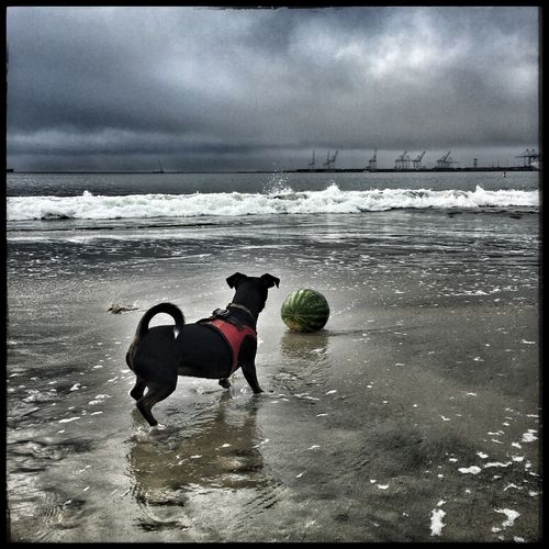Sea Dog Pets