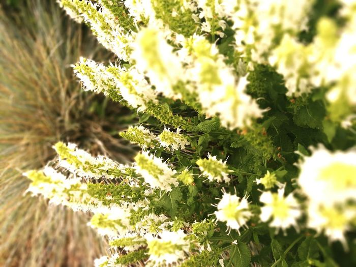 Nature Plant Green Color Growth Selective Focus Plant Part Outdoors Beauty In Nature Close-up Springtime Summer Uncultivated Sunlight Day Outdoor Pursuit No People Flower Beauty Freshness Leaf Marielaureduarte