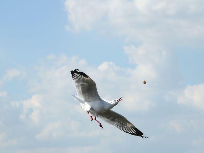 Seagull flying against sky