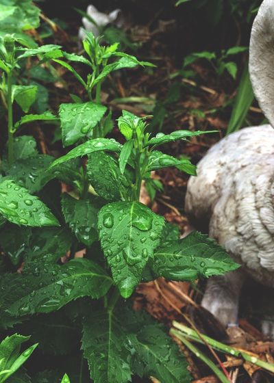 Morning rain ✨💧🌱😌 Plant Leaf Nature Growth Tadaa Community Green Color One Animal Day Outdoors No People Close-up Beauty In Nature Fragility Freshness Rain Drops Chinese Bellflower