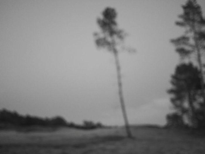 Den Brand Hechtel Tree Sand Dune Sky Landscape
