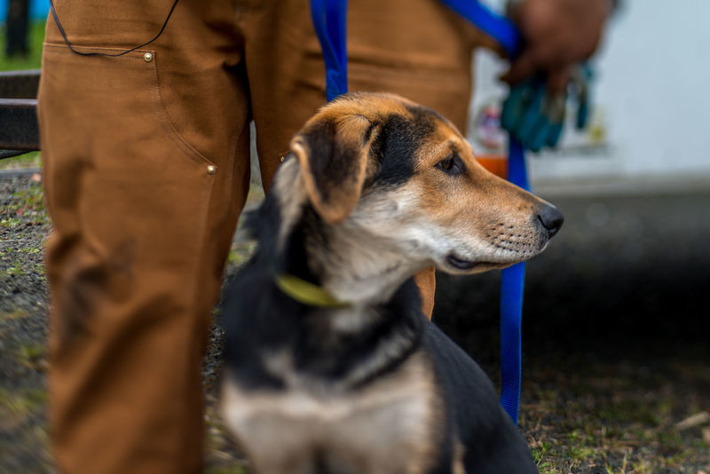 Dog Dogs Dogs Of EyeEm Dogslife Leash German Shepherd Labrador