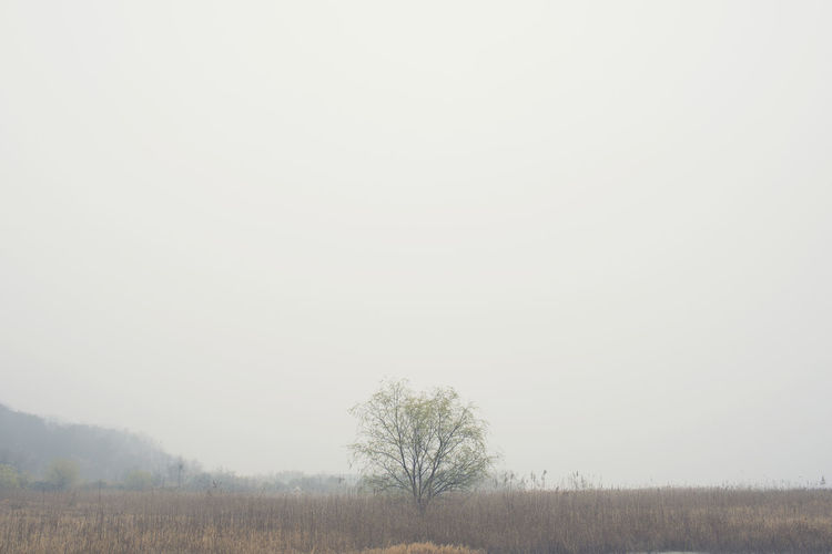 Agriculture Bare Tree Beauty In Nature Clear Sky Day Field Grass Korea Landscape Nature No People Outdoors Rural Scene Scenics Sky Tranquil Scene Tranquility Tree