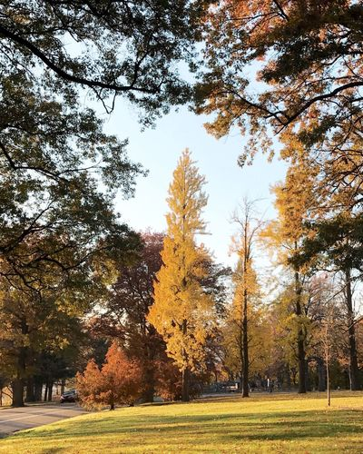 Tree Autumn Nature No People Outdoors Growth Beauty In Nature Grass Sky Architecture Day