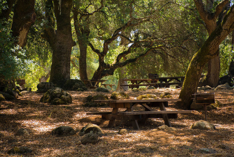 Picnic under the Trees Forest Lunch Nature Outdoor Outdoors Picnic Relaxation Shade Tranquility Tree Trunk