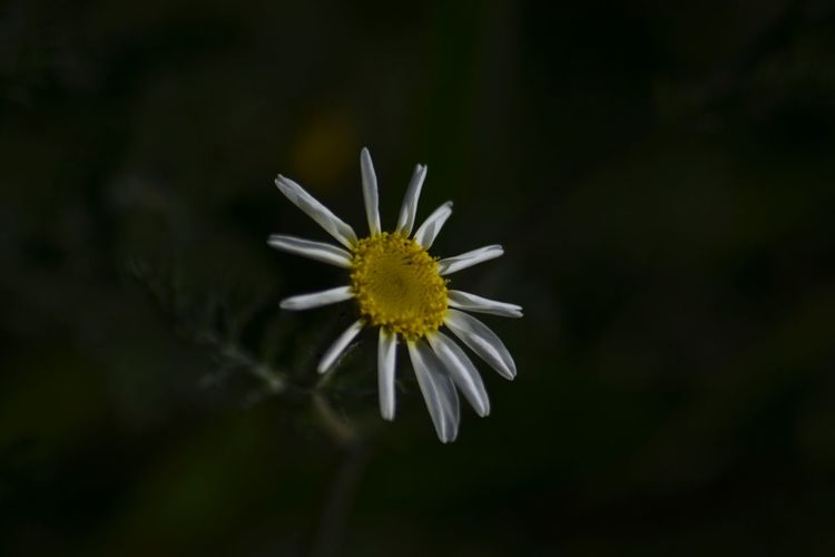 Fiori Margherita Flower EyeEm Flower Hello World Life
