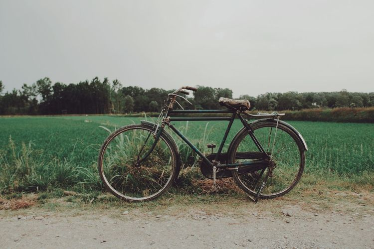 Hay that's my bike Plant Sky Land Bicycle Nature Land Vehicle Field Transportation Tree Landscape Grass Day Green Color Tranquility Clear Sky