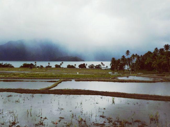Clouds And Landscape Clouds And Lake Sumatera Sumatra  Lake View Lake Rice Paddy