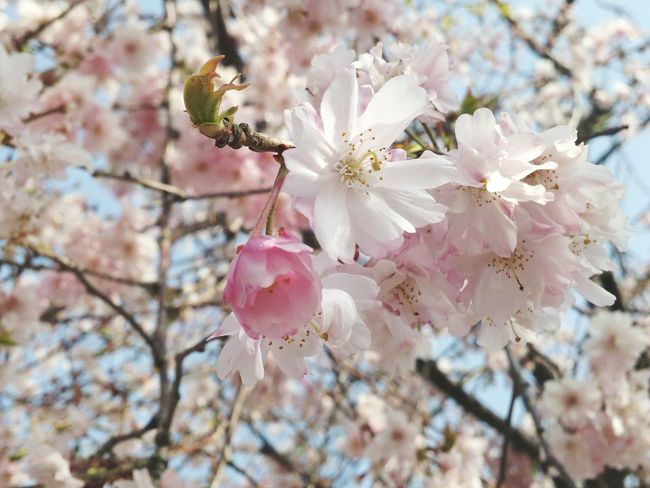 Hello World Springtime Travel Photography Sweet Moments Walking Around Walking Around Taking Pictures From My Point Of View Japan Photography Nature Photography EyeEm Best Shots - Nature Flowers Flower Collection EyeEm Nature Lover Inbloom