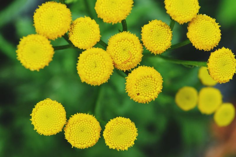 So yellow. Flower Flower Head Multi Colored Yellow Variation Close-up Green Color Plant Life Blooming Botany Petal Geometric Shape Fragility