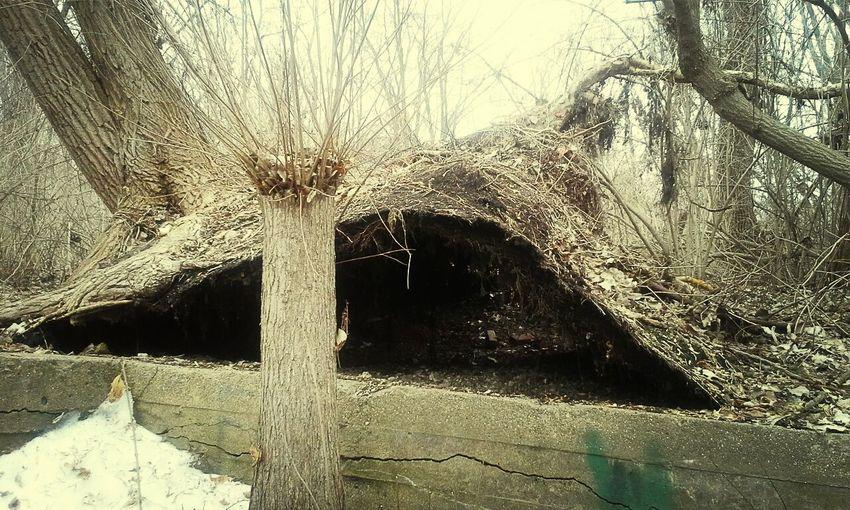 Uprooted tree, make a shelter for me. Earth Is Beautiful