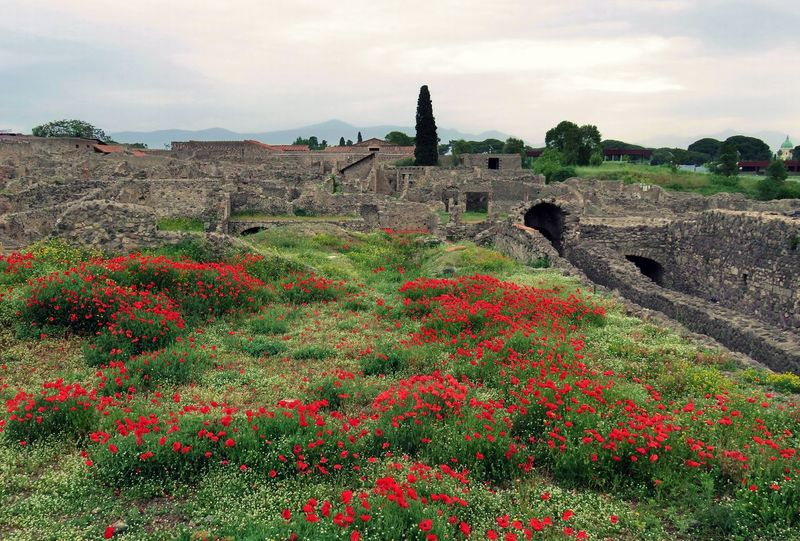 Ancient Ancient Civilization Architecture Beauty In Nature Built Structure Day Flower History Nature No People Old Ruin Outdoors Pompeii  Sky The Past Tourism Travel Destinations