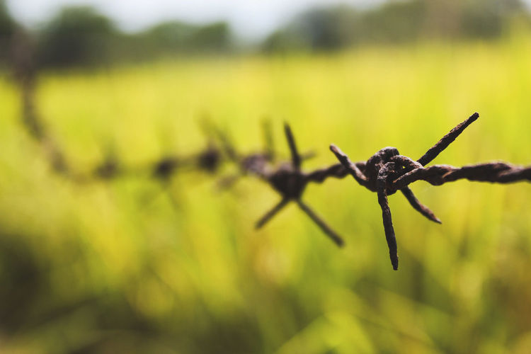 Close-up of barbed wire on field