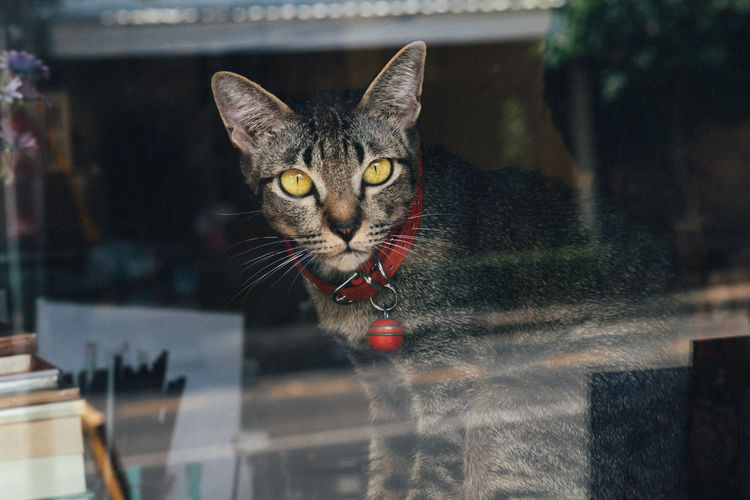 cat! Pets Domestic Domestic Animals Animal Themes Animal Domestic Cat Cat Feline One Animal Vertebrate Portrait No People Reflection Shop Corner Shop Urban Coffee Shop