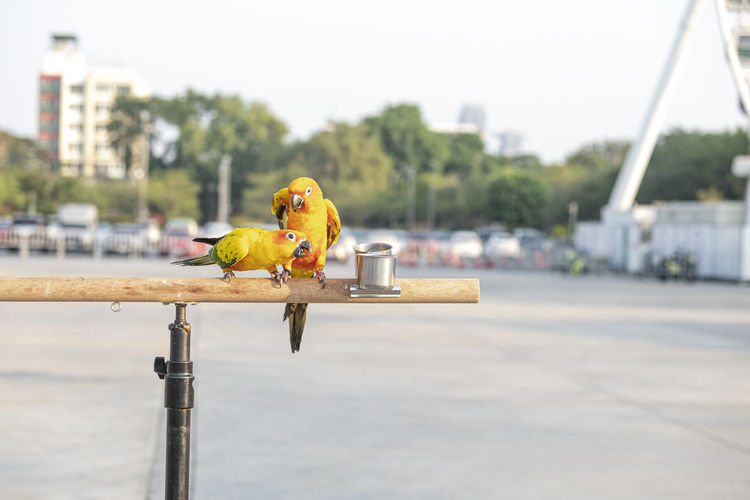 Bird perching on a city