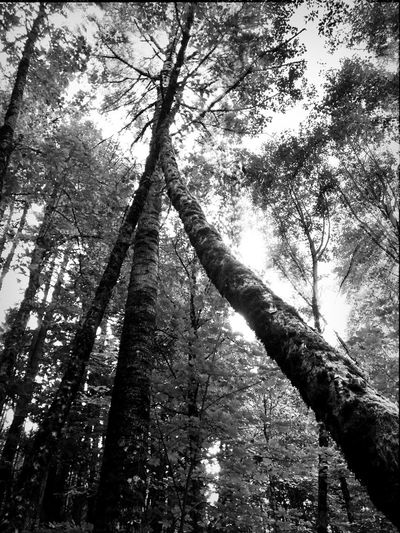 Light And Shadow Blackandwhite EyeEm Exploring Blackandwhite Photography Lean On Me Eye4photography  Abstract Nature Nature Collection TreePorn Nature Porn