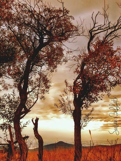 Dancing Willows, A small grove of Willow trees with interesting branches in the early fall. Beautiful Nature Naturephotography Fall Beauty Nature On Your Doorstep Country Living Great Outdoors Creative Photography Colors Of Autumn Autumn Leaves