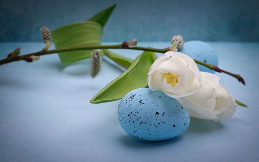 Tulip Flower Flowering Plant Plant Freshness Beauty In Nature Fragility Close-up Vulnerability  No People Petal Inflorescence Focus On Foreground White Color Nature Flower Head Growth Still Life Day Pollen Nature_collection Easter Easter Egg EyeEm Gallery EyeEm Nature Lover Blüte