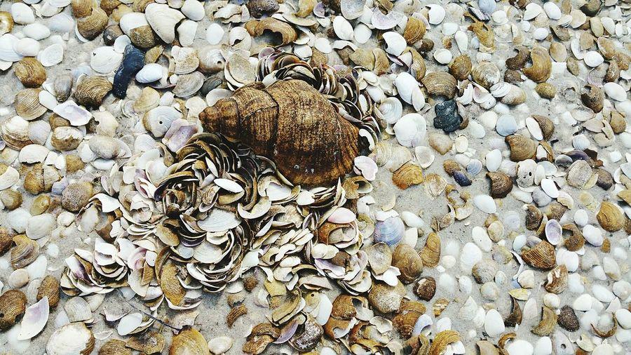Shells southport Tasmania