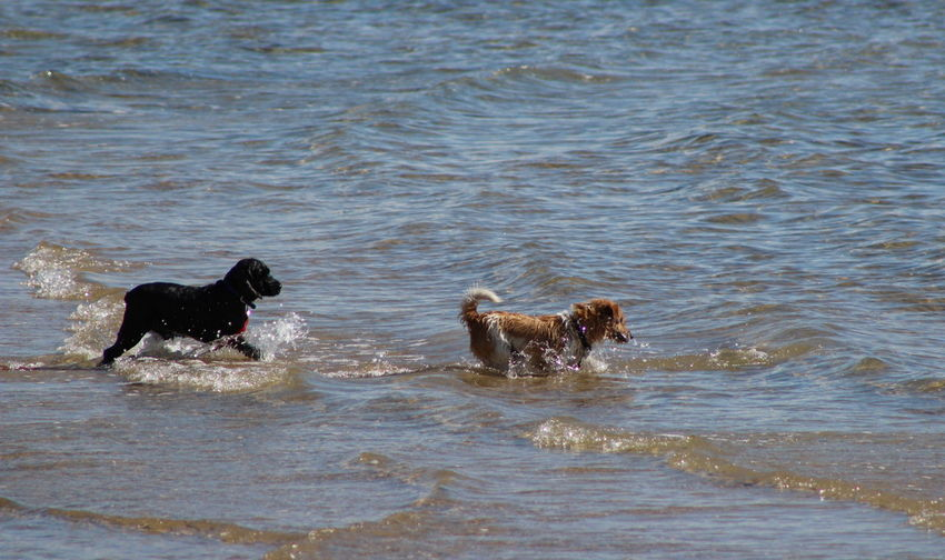 Life Is A Beach Landscape Nature The Purist (no Edit, No Filter) Playful Puppy Dogs Go For A Splash ;))