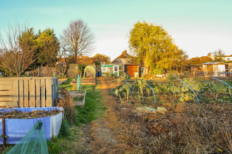 Allotment plot in Kent, England. An allotment is a plot of land you rent and then grow your own vegetables. Crop  Food Grow Your Own Allotment Garden Allotment Architecture Bright Building Exterior Built Structure Community Garden Day Field Grass Nature No People Outdoors Plot Shed Sky Tree