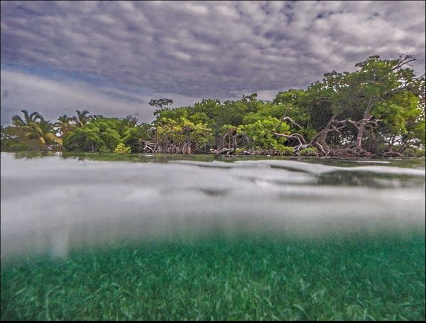 above & below Beauty In Nature Depth Of Field Dramitic Sky Eel Grass January 2015, Near Tarpon Caye Lodge Belize Mangrove Island Not Bored Outdoors Reflection Remote Scenics Tranquility Tree Water