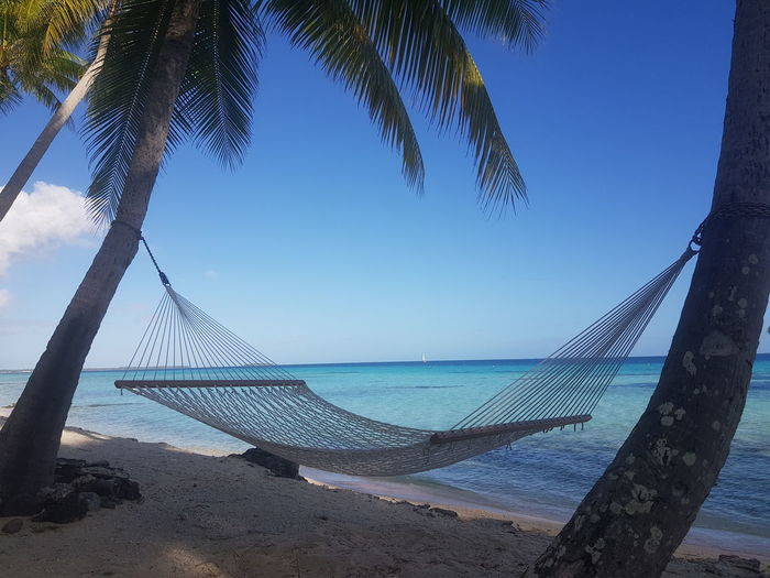 Beach Sea Sand Horizon Over Water Tree Travel Destinations Vacations Water Blue Ilsland Tahiti French Polynesia Hamac