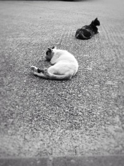 rest área here #cat #cute #photography #phonephotography #picture #pic #street #Chillin #calm #blackandwhite #Black&White #blancoynegro  #sleepy #catlovers Nature Animal Themes Outdoors Animals In The Wild