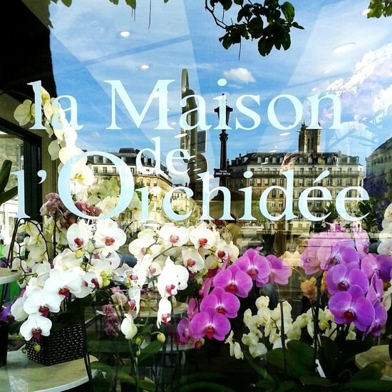 La Maison de l'orchidée, Paris Paris Orchids Reflection Maison Orchidées Window Through The Window Mirrored