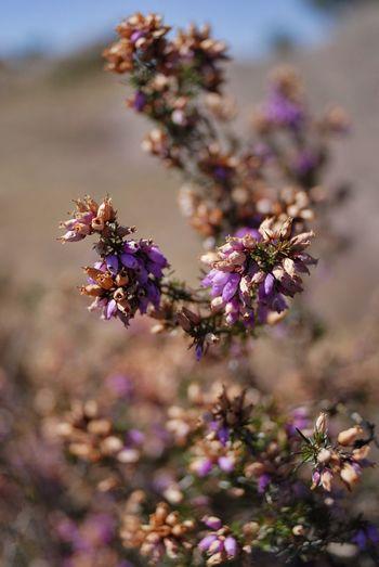 Macro Lavande Nature EyeEm Nature Lover EyeEm Best Shots Flowers Flower