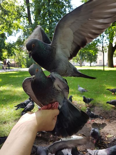 City life.. Birds Pigeons