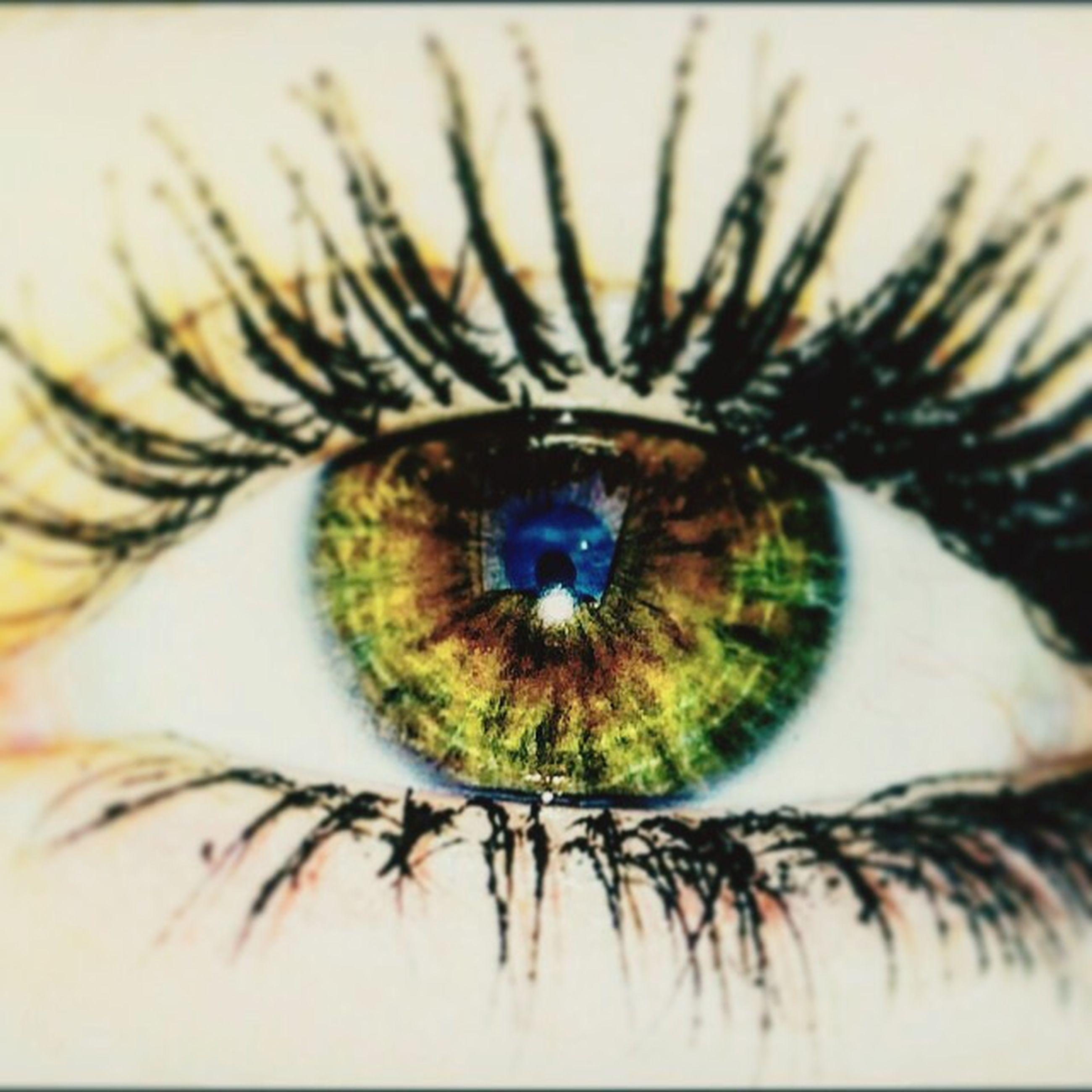human eye, eyesight, eyelash, close-up, sensory perception, extreme close-up, eyeball, looking at camera, iris - eye, portrait, reflection, extreme close up, full frame, part of, unrecognizable person, circle, detail