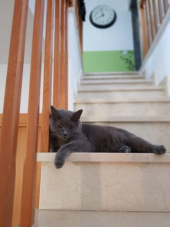 Domestic Cat Animal Feline No People Mycat♥ Consentido Mimoso