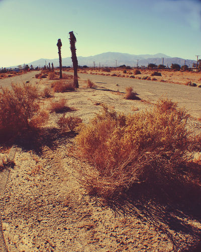 Desert Salton Sea Arid Climate Beauty In Nature Clear Sky Day Full Length Landscape Nature One Person Outdoors People Real People Sand Scenics Sky Tranquil Scene Tranquility