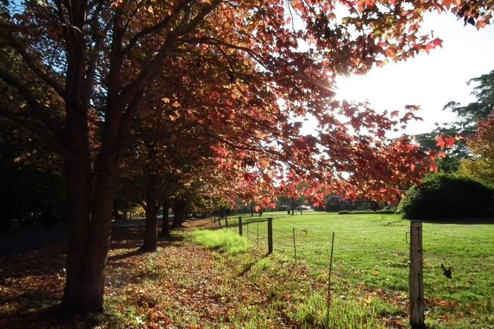 TreePorn Autumn Colors