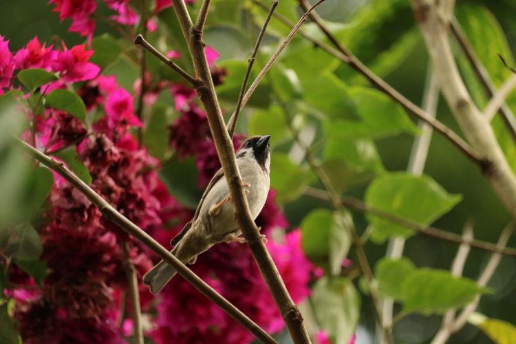 sparrow EyeEm