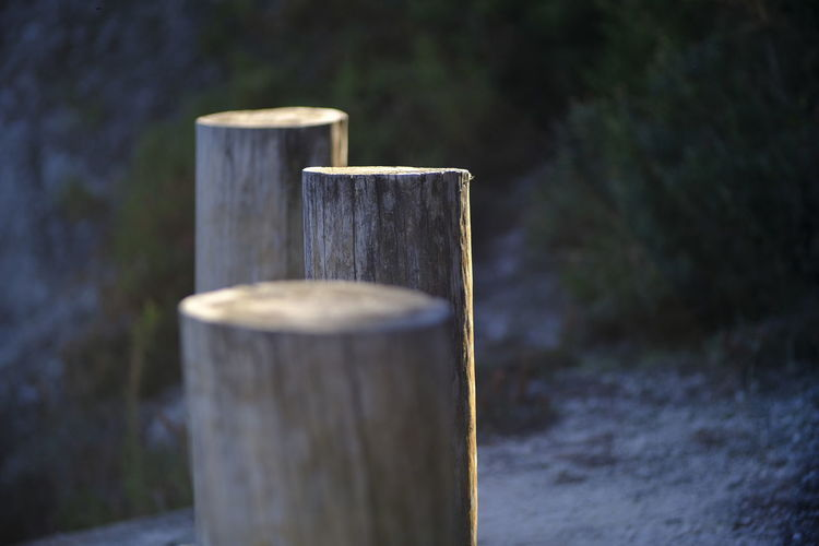 Focus Close-up Day Focus On Foreground Nature No People Outdoors Selective Focus Textured  Tree Water Wood - Material Wooden Post