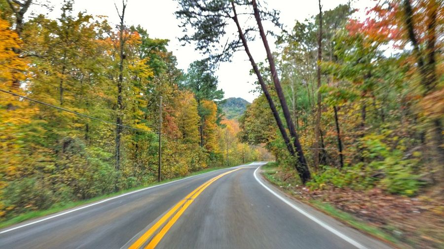Tree Road Plant Transportation Direction The Way Forward Road Marking Beauty In Nature Symbol Marking Diminishing Perspective Double Yellow Line Nature Day No People Growth Tranquility Non-urban Scene Land Empty Road Autumn colors Country Road Kentucky Backroad Driving Through The Hills