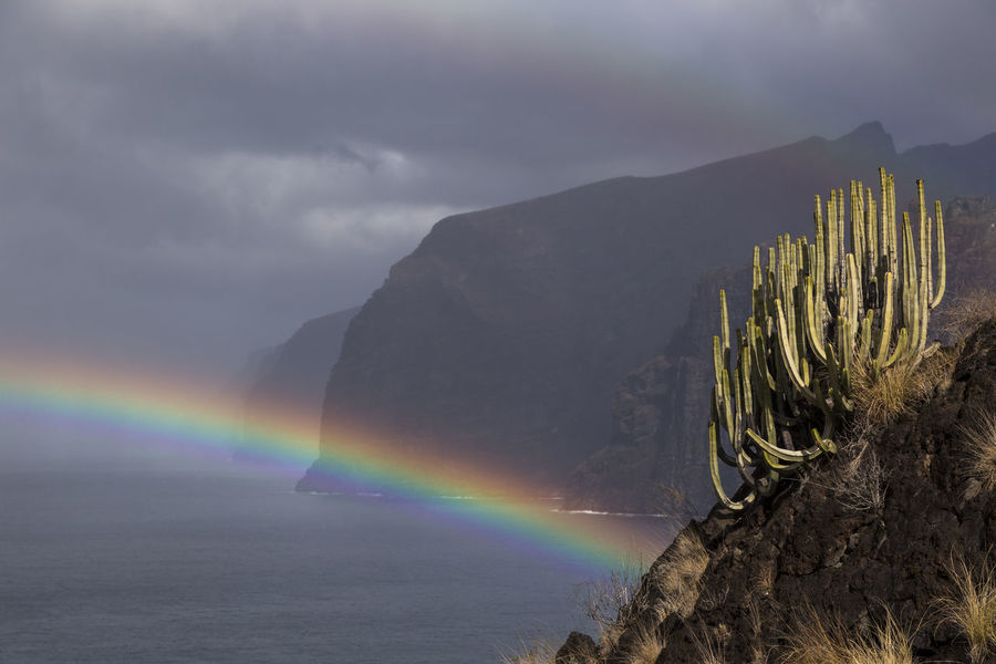 Los Gigantes, Tenerife Beauty In Nature Cloud - Sky Day Double Rainbow Idyllic Landscape Mountain Mountain Range Nature No People Outdoors Rainbow Scenics Sky Tranquil Scene Tranquility Tree Weather