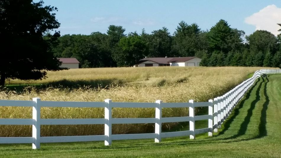 Agriculture Agricultural Land Agriculture Photography Wheat Wheat Field Picket Fence Fence Shadows White Picket Fence Crop  Wheat Grass