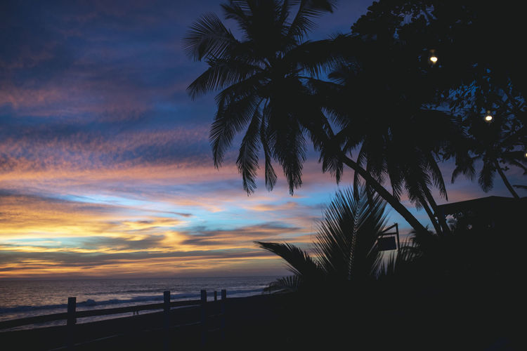 Beach Beauty In Nature Cloud - Sky Coconut Palm Tree Horizon Over Water Land Nature No People Outdoors Palm Leaf Palm Tree Plant Scenics - Nature Sea Silhouette Sky Sunset Tranquil Scene Tranquility Tree Tropical Climate Water