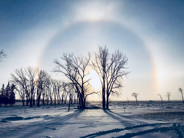 So cold today Sun Dog Cold Temperature Bare Tree Winter Snow Beauty In Nature Tree Tranquility Majestic Tranquil Scene Nature Landscape Scenics Rainbow Outdoors Branch Sky Day No People Shades Of Winter