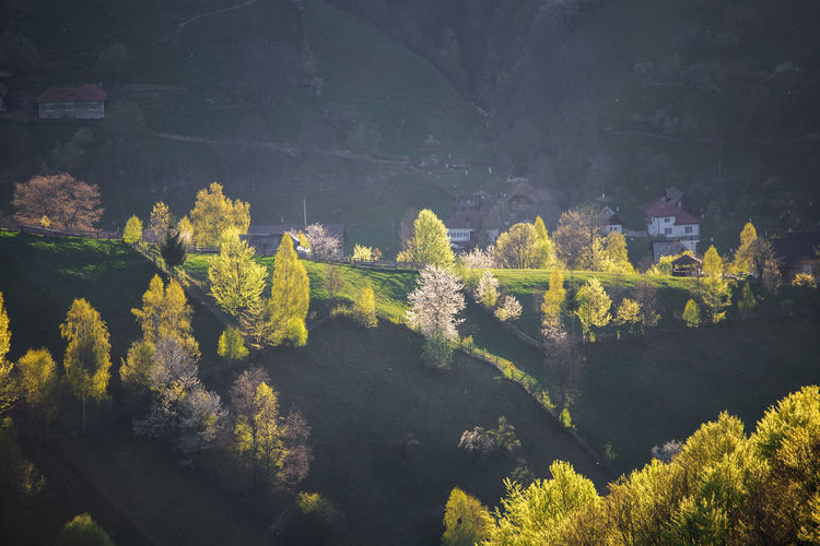 High angle view of trees on landscape against mountain
