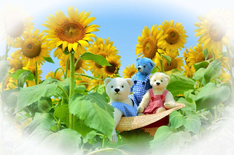 Teddy bears in