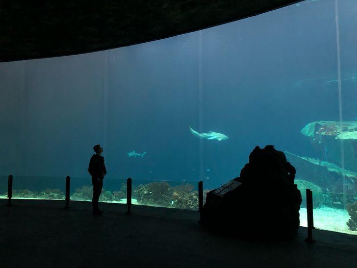 Aquarium Zoo Water Sea Silhouette Men Nature Tank People Fish Glass - Material Watching Marine Outdoors Aquarium