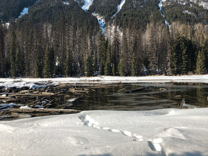 A view of snow covered lillooet lake with driftwoods floating on the surface of the lake.