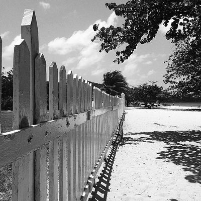 Ig_cameras_united Ilivewhereyouvacation Insta_noir Westindies_landscape Westindies_bnw Wu_caribbean Awesome_captures All_shots Grenada Picketfence Picoftheday Phototag_it