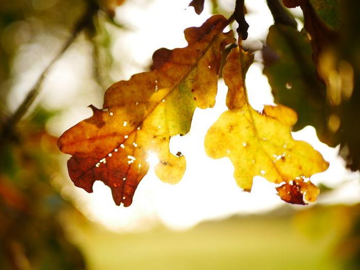 Leaf Nature Outdoors Autumn No People Close-up Tree Botany