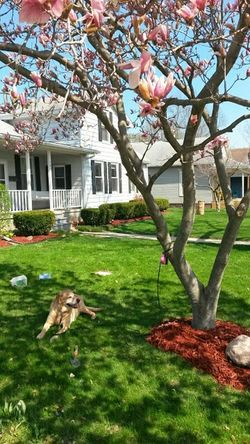 Rachels relaxing day Home Sweet Home I Love My Dog Flowers Front Yard